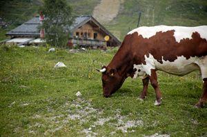 Gosau in the Dachstein Mountains