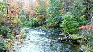 Mountain creek 1