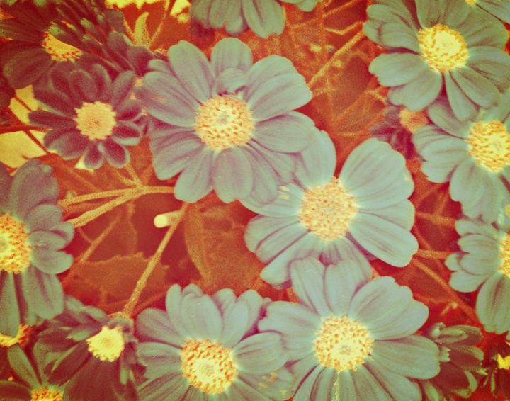 Daisy flowers - Blue - CLA