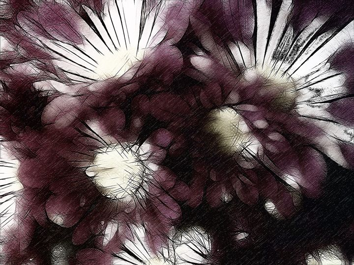 Daisy flowers - Purple and white - CLA