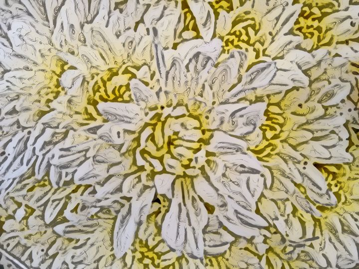 Chrysanthemum or mums - CLA