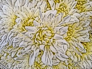 Chrysanthemum or mums - CLA