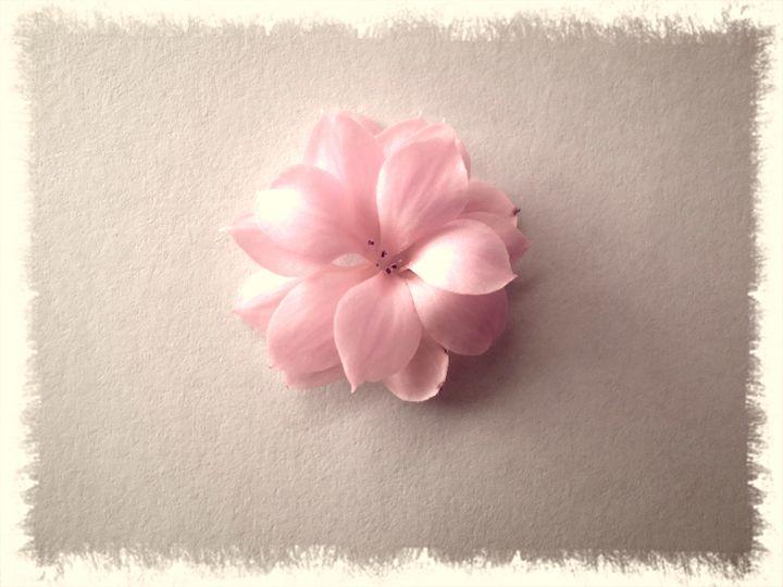 Kalanchoe - Pink or rose - CLA