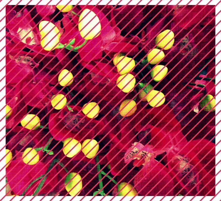 Flowers - CLA