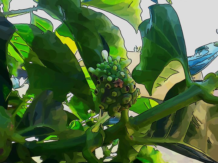 Noni - Fruit - CLA