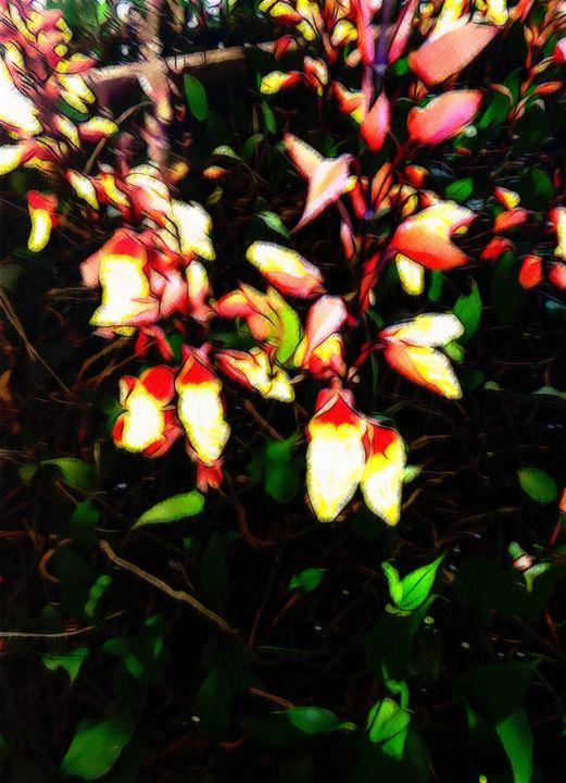Lady slipper creeper - Flowers - CLA