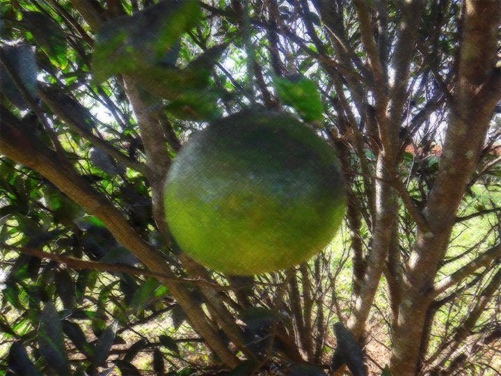 Tangerine - Branch - CLA
