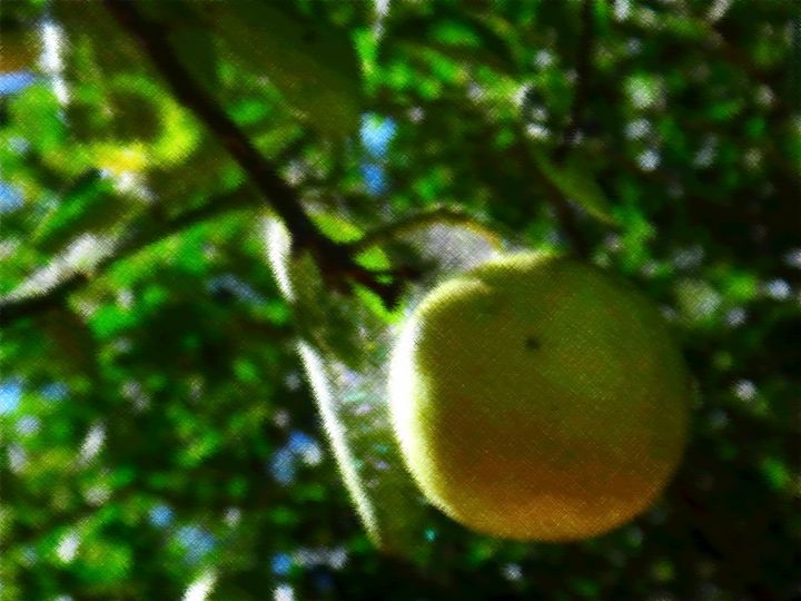 Sweet Lime - CLA