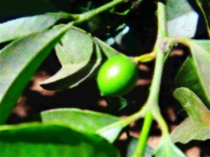 Small fruit - CLA
