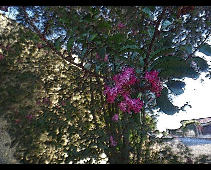 Crapemyrtle - Pink flowers - CLA