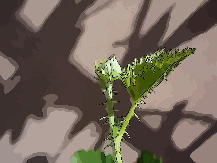 Floral bud blackberry - CLA