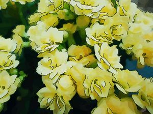 Yellow flower of kalanchoe