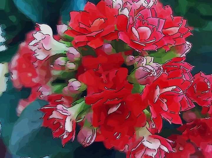 Red flowers - Kalanchoe - CLA