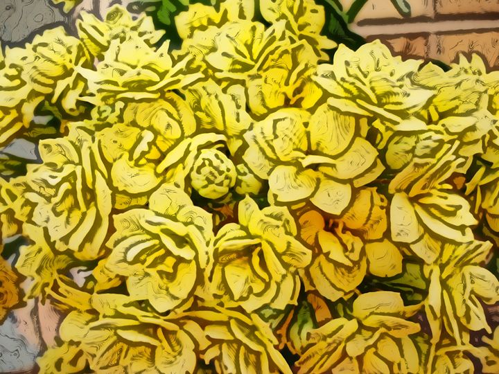 Yellow flower of kalanchoe - CLA
