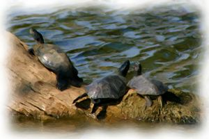 The Turtles Are Free