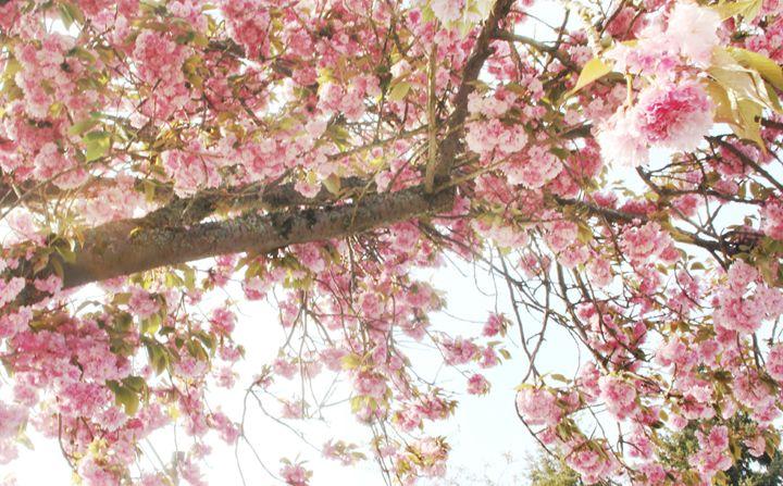 Treeflowers - Crazyville & Fantasyland