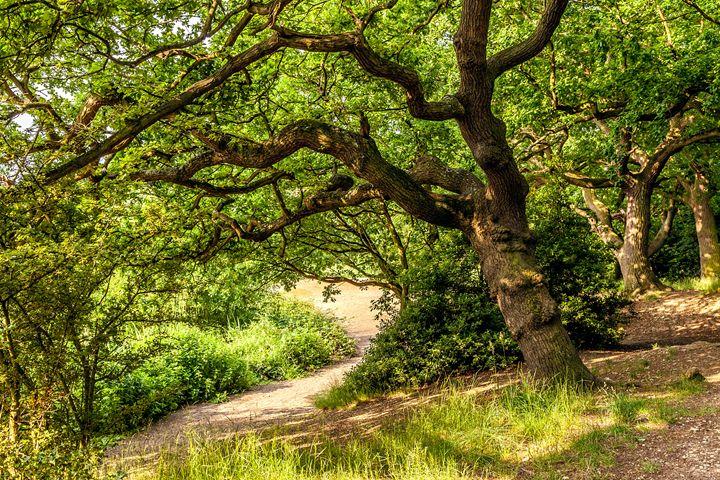 Summer Woodland - FineArtNorfolk