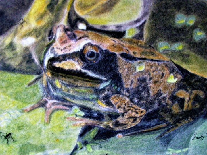Toad - Art by Sandy Taylor