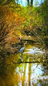 Stafford County - Widewater - Refuged