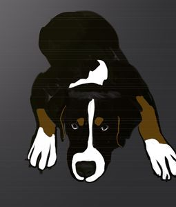Swiss Mountain Dog Puppy Original Ar