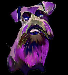 Colourful Little Purple Schnauzer