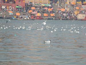 Shores of Ganges