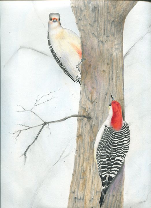 Red-bellied Woodpeckers, A Chance En - Pen's Pix