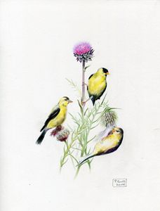 Goldfinches at Lunch