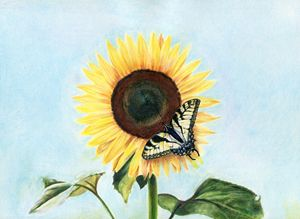 Sunflower with Swallowtail