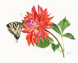 Coral Dahlia Entertains Swallowtail