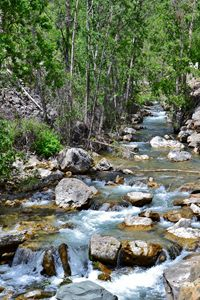 Spearfish Creek in the Black Hills