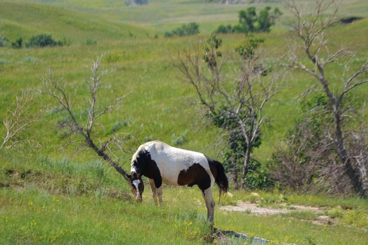 Paint horse in field - 56th Street Photo