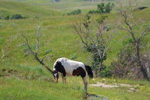 Paint horse in field