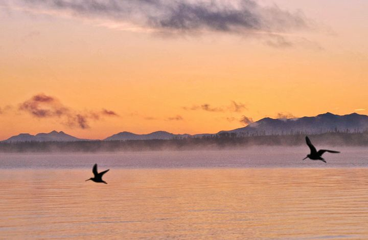 Greeting the Morning - Mistyck Moon Creations Gallery