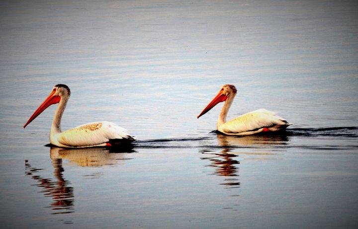 Pelicans - Mistyck Moon Creations Gallery