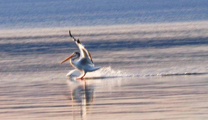 Pelican Landing - Mistyck Moon Creations Gallery