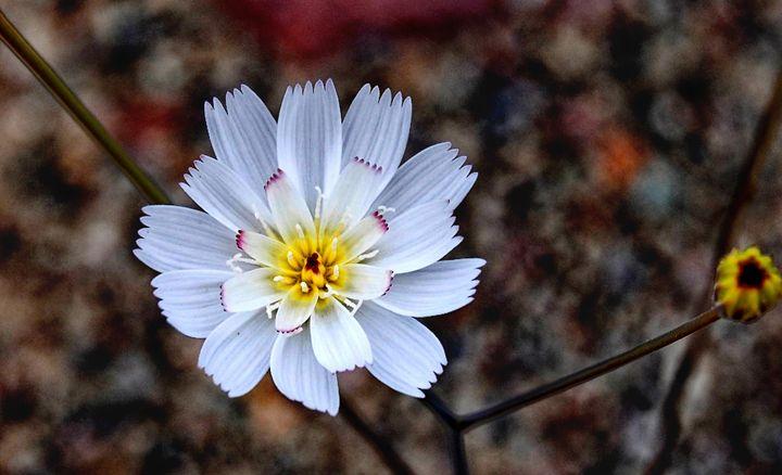 Desert Bloom - Mistyck Moon Creations Gallery