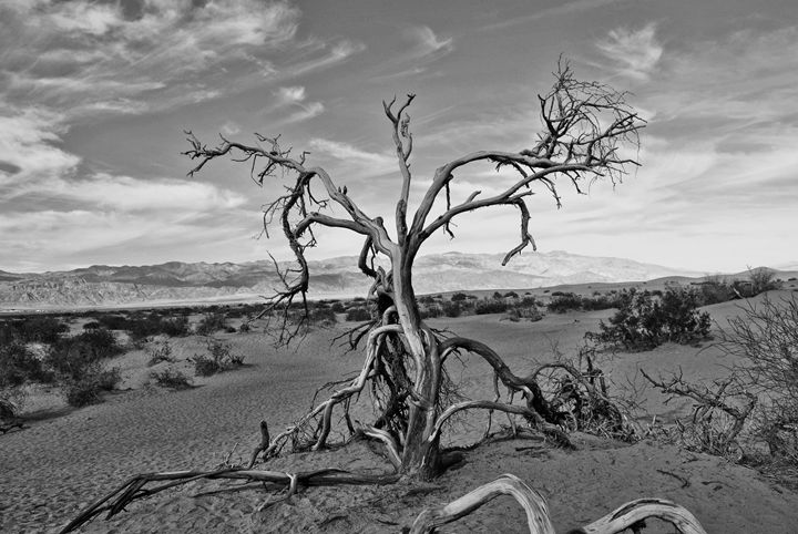 Dead Tree - Mistyck Moon Creations Gallery
