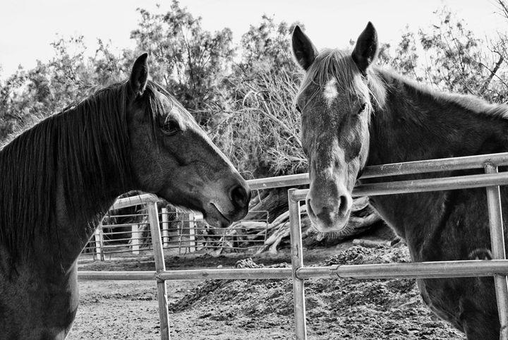 Desert Ranch Dwellers - Mistyck Moon Creations Gallery