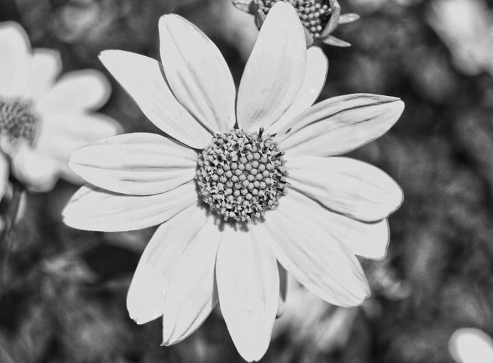 Beauty In Black and White - Mistyck Moon Creations Gallery