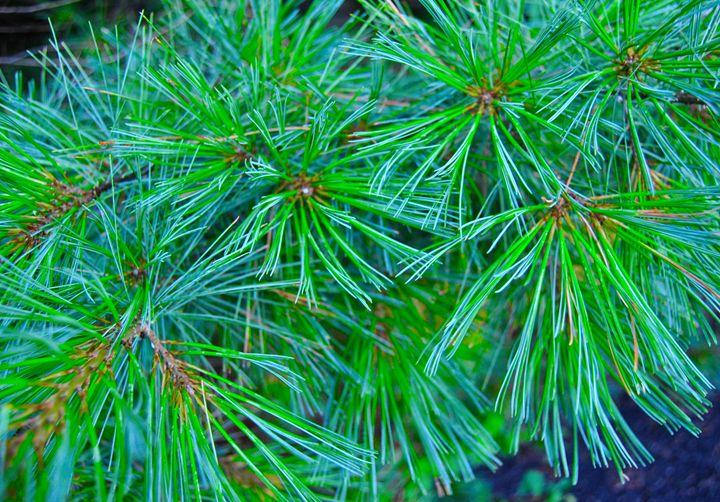 Pine Needles - Mistyck Moon Creations Gallery