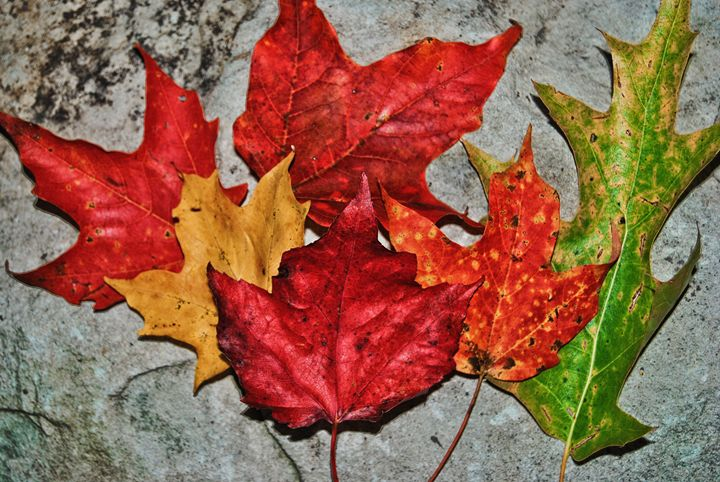 Fall Leaves - Mistyck Moon Creations Gallery