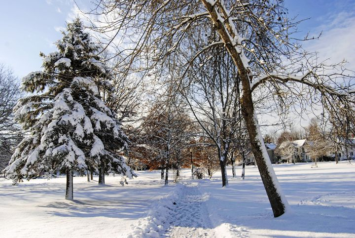 A Winter Stroll - Mistyck Moon Creations Gallery