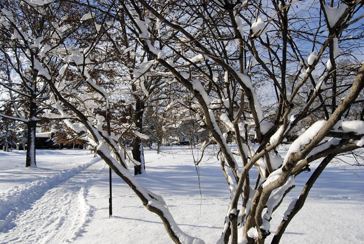 The Beauty Of Winter - Mistyck Moon Creations Gallery
