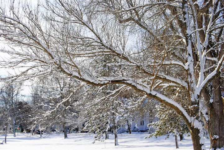 Winter Has Arrived - Mistyck Moon Creations Gallery