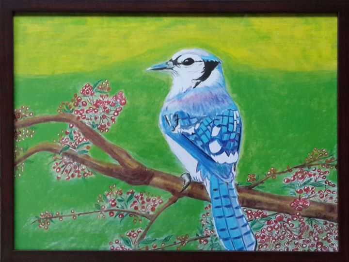 Blue Jay Bird - Vaibhav Salvi