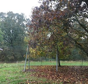 Fall Swings