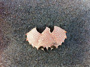 BatShell