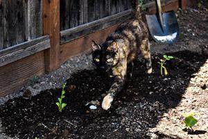 Ariadne in the Garden