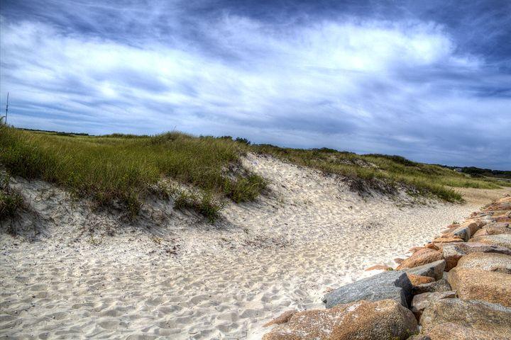 Seagull Beach - John Trask